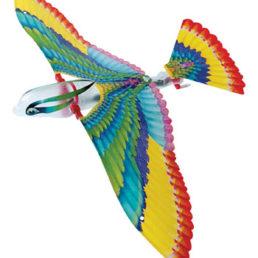 tim bird